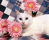 CAT 02 RK0387 02