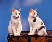 CAT 02 RK0399 08