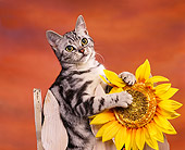 CAT 02 RK0407 07