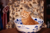 CAT 02 RK0423 03