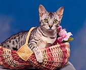 CAT 02 RK0459 04