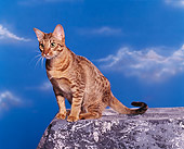 CAT 02 RK0463 02
