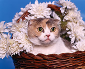CAT 02 RK0470 03