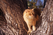 CAT 02 RK0496 05