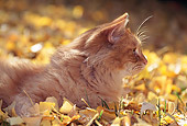 CAT 02 RK0499 02