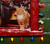 CAT 02 RK0505 04