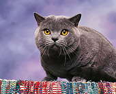 CAT 02 RK0509 05