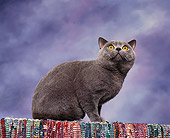 CAT 02 RK0510 01