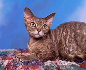 CAT 02 RK0516 02