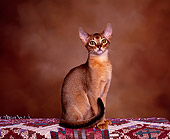 CAT 02 RK0520 02