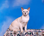CAT 02 RK0523 05