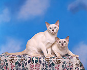 CAT 02 RK0524 03