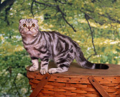 CAT 02 RK0538 03