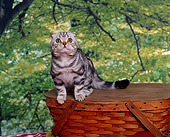 CAT 02 RK0538 04
