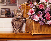 CAT 02 RK0569 05