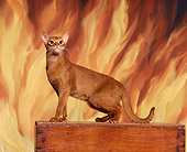 CAT 02 RK0583 09