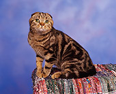 CAT 02 RK0589 03