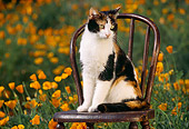 CAT 02 RK0640 03