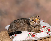 CAT 02 RK0653 01