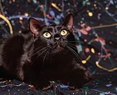 CAT 02 RK0659 05