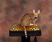 CAT 02 RK0663 05