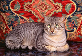 CAT 02 RK0669 02