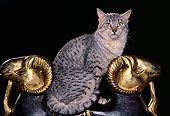 CAT 02 RK0678 04