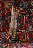 CAT 02 RK0692 02