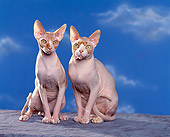 CAT 02 RK0702 02