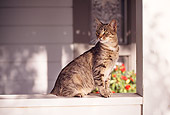 CAT 02 RK0753 09