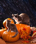 CAT 02 RK0781 01