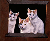 CAT 02 RK0782 03
