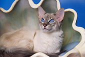 CAT 02 RK0806 01