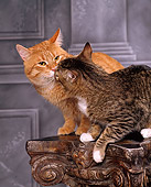 CAT 02 RK0814 06