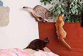 CAT 02 RK0844 04
