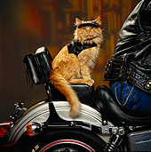 CAT 02 RK0908 17
