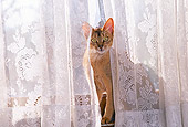 CAT 02 RK0939 01