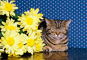 CAT 02 RK0963 09