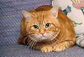 CAT 02 RK0975 03