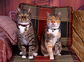 CAT 02 RK1018 03