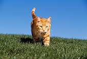 CAT 02 RK1021 07