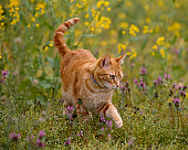 CAT 02 RK1024 12
