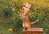 CAT 02 RK1027 09