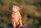 CAT 02 RK1031 07