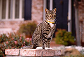 CAT 02 RK1045 03