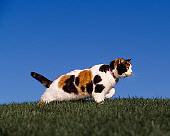CAT 02 RK1054 02