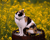 CAT 02 RK1062 05
