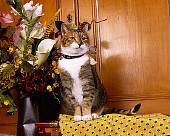 CAT 02 RK1063 08