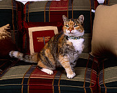CAT 02 RK1064 09