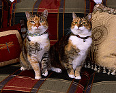 CAT 02 RK1065 09